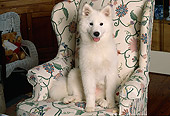 DOG 01 RK0665 13