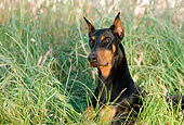 DOG 01 RK0677 10