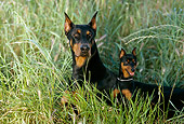 DOG 01 RK0678 07