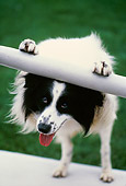 DOG 01 RK0682 02