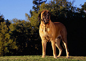 DOG 01 RK0751 02
