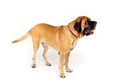 DOG 01 RK0757 01