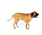 DOG 01 RK0758 01