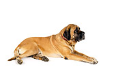 DOG 01 RK0759 01