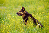 DOG 01 RK0788 06