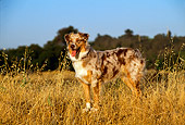 DOG 01 RK0795 01