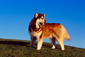 DOG 01 RK0800 01