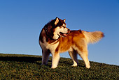 DOG 01 RK0800 02