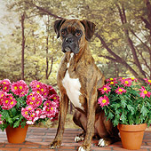 DOG 01 RS0032 01
