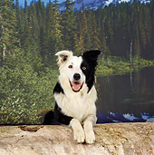 DOG 01 RS0054 01