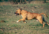 DOG 02 AB0003 01