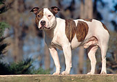 DOG 02 AB0006 01
