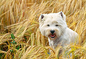 DOG 02 AB0011 01