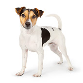 DOG 02 BK0001 01