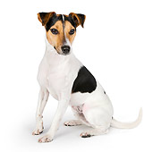 DOG 02 BK0004 01