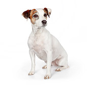 DOG 02 BK0006 01