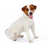 DOG 02 BK0008 01