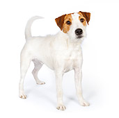 DOG 02 BK0009 01