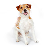 DOG 02 BK0010 01