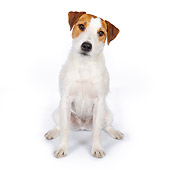 DOG 02 BK0011 01