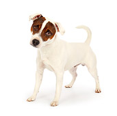 DOG 02 BK0014 01