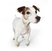 DOG 02 BK0015 01