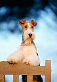 DOG 02 CB0001 01