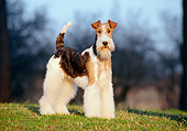 DOG 02 CB0003 01
