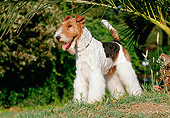 DOG 02 CB0004 01