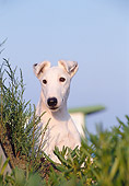 DOG 02 CB0011 01
