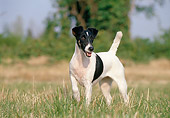 DOG 02 CB0013 01
