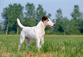 DOG 02 CB0014 01