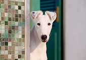 DOG 02 CB0019 01