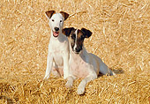 DOG 02 CB0020 01