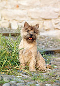 DOG 02 CB0022 01
