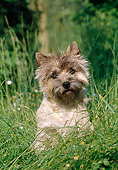DOG 02 CB0023 01