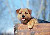DOG 02 CB0029 01