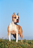 DOG 02 CB0039 01