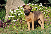 DOG 02 CB0040 01