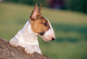 DOG 02 CB0042 01