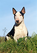 DOG 02 CB0045 01