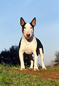 DOG 02 CB0046 01