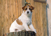 DOG 02 CB0048 01