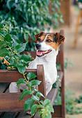 DOG 02 CB0058 01