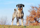 DOG 02 CB0060 01