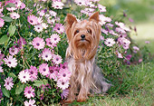 DOG 02 CB0064 01