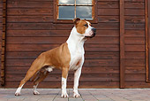 DOG 02 CB0065 01