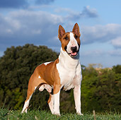 DOG 02 CB0070 01