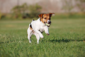DOG 02 CB0079 01