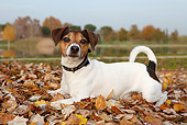DOG 02 CB0082 01